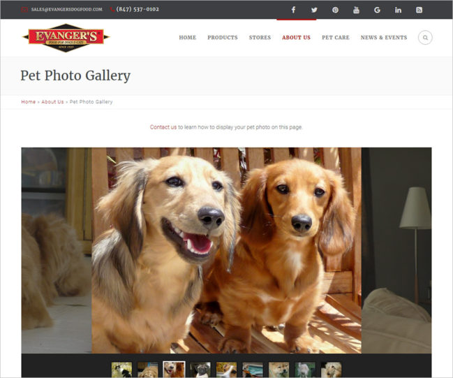 Evanger's Dog Food - Photo of Pet Photo Gallery Page